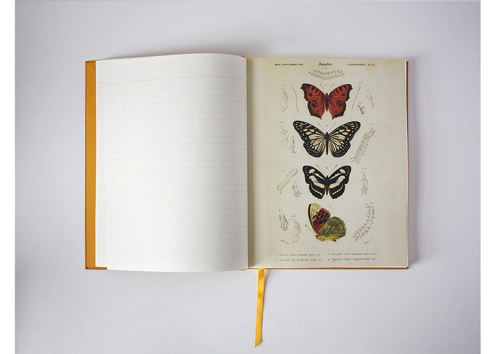 Princeton Architectural Press Observer's Notebooks | Butterflies