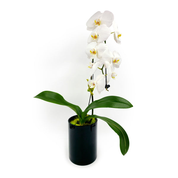 Orchid in Black Glass Vase