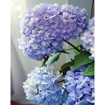 "Pink Picasso Paint by Numbers Kit ""Happily Hydrangeas"""