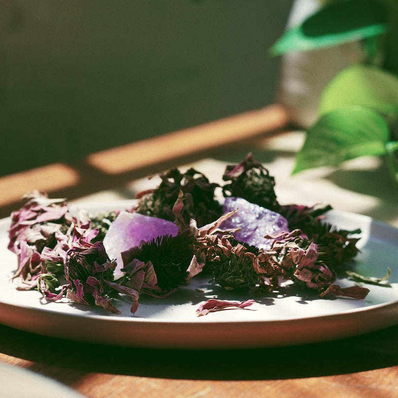 Dried echinacea on a plate