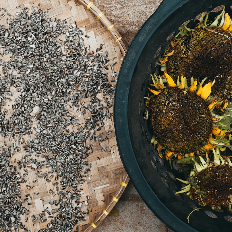 Sunflower seeds pictured next to a bowl of sunflowers