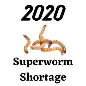 Superworm Shortage