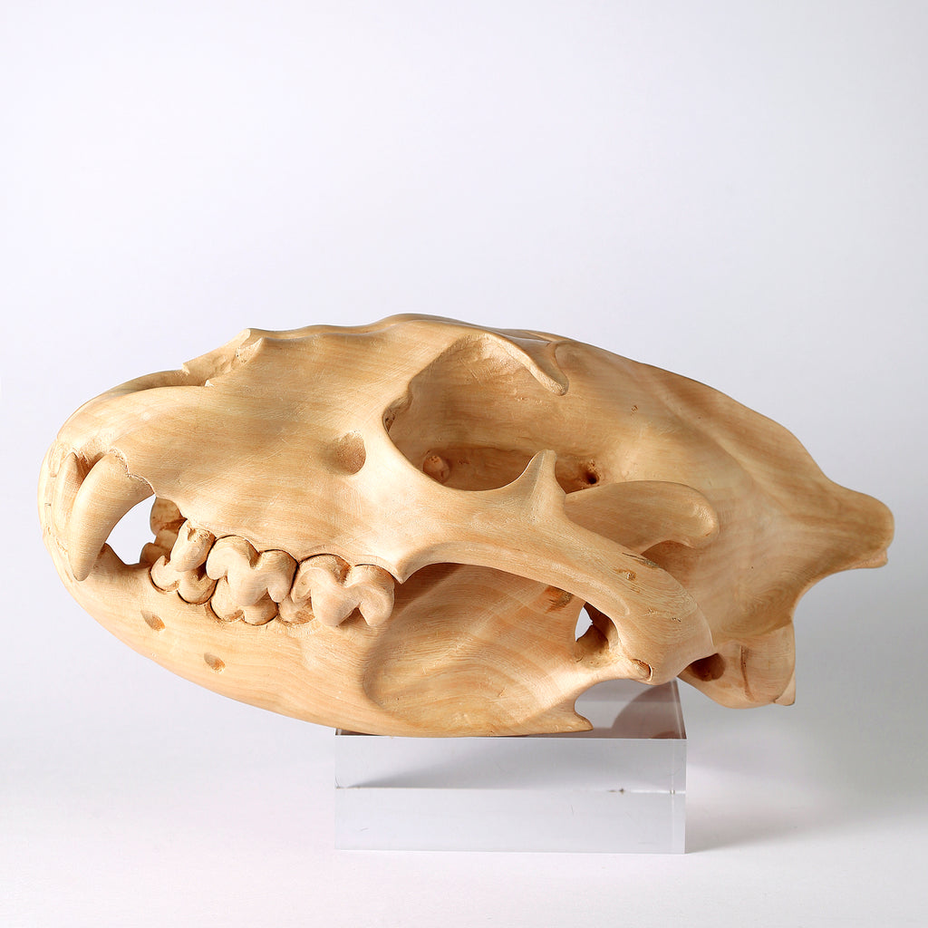 Delaire Graff Estate, Africa Nova- Friday Jibu, Wooden Hyena Skull