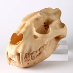 Load image into Gallery viewer, Delaire Graff Estate, Africa Nova- Friday Jibu, Wooden Hyena Skull
