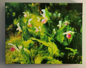 """Lady's Slippers"""