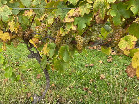 Staindl Wines Chardonnay is ripe for picking over Easter 2021