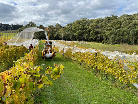 Netting is distributed over Staindl Wines' vineyard to protect the grapes
