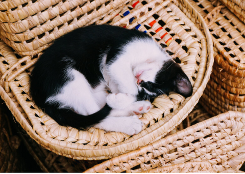 Cat curled up in a basket sleeping. Catnaps are essential during pregnancy so go easy on yourself