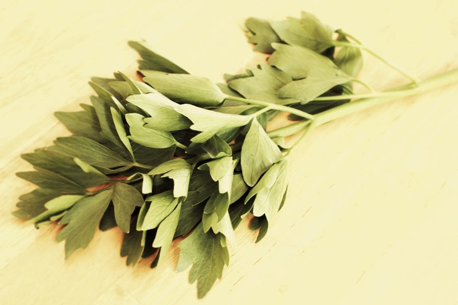 Quiz 23: Can you name this medicinal herb?