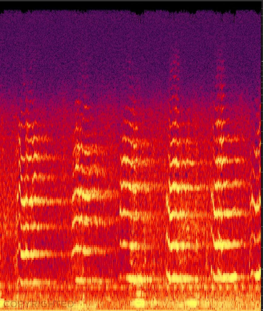 Song Of The Whales: Pilot Whale Sonogram By Hagop Ohannessian