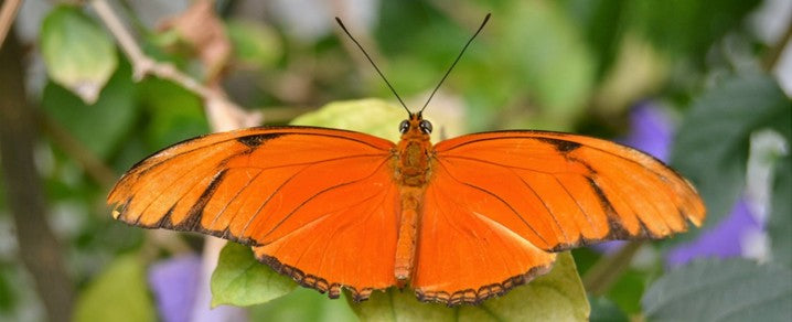 Rêve de Papillon Orange signification | Rêve de Papillon