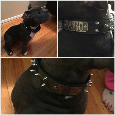 "N14 - 1 1/2"" Name Plate Spiked Leather Dog Collar - 2"