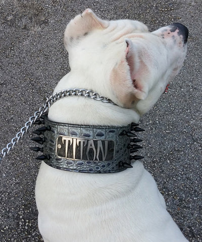 "NX2 - 3"" Name Plate Spiked Leather Dog Collar"