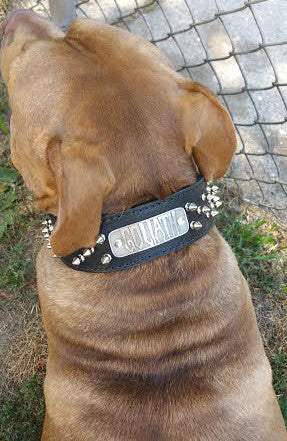 "N6 - 2"" Name Plate Tapered Dog Collar w/Spikes - 5"