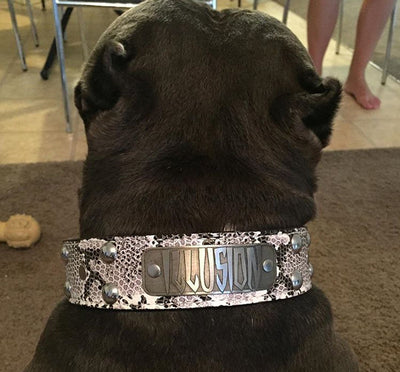 "N10 - Name Plate 1 1/2"" Studded Leather Dog Collar - 4"