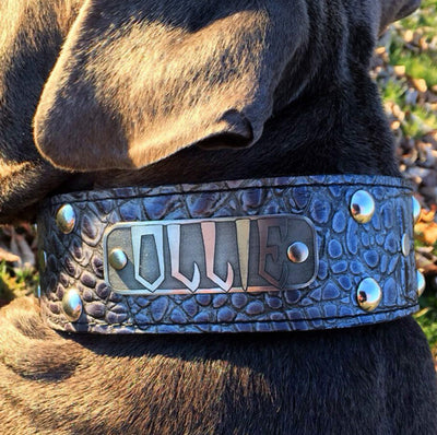 "N12 - 2"" Name Plate Studded Leather Dog Collar - 5"
