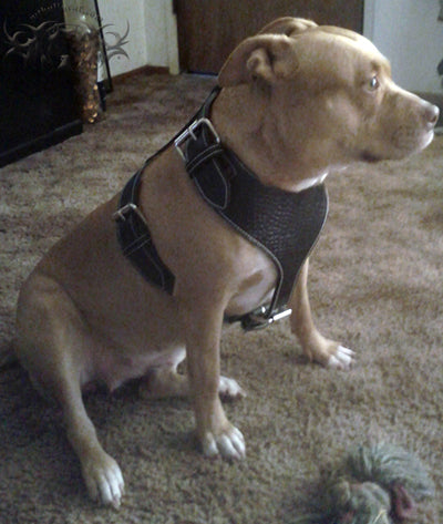 Leather Dog Harness - 8