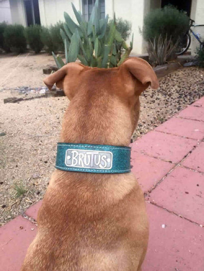 "N15 - 2"" Name Plate Leather Dog Collar"