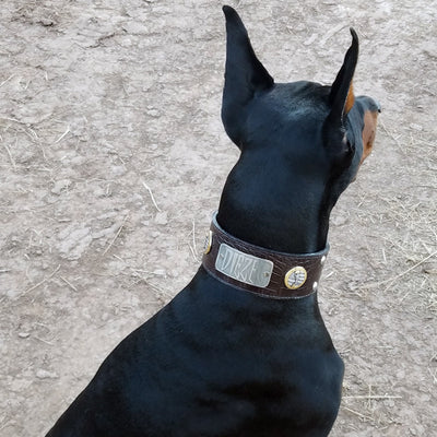 "J6 - 2 1/2"" Military Themed Studded Leather Dog Collar - 2"