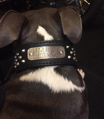 "N5 - 2"" Name Plate Tapered Dog Collar w/Studs - 4"