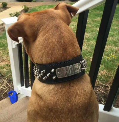 "N6 - 2"" Name Plate Tapered Dog Collar w/Spikes - 2"