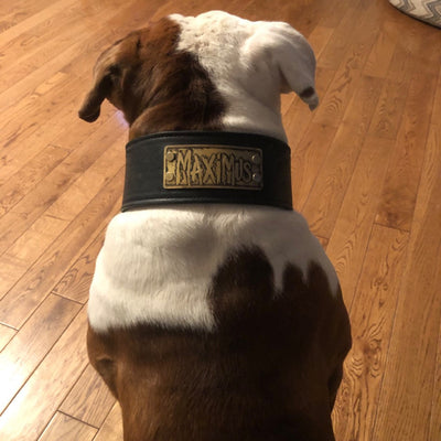 "NJ11 - 2 1/2"" Name Plate Leather Dog Collar"