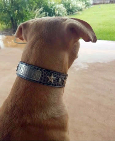 "V42 - 1 1/2"" Name Plate Star Leather Dog Collar w/Gems"