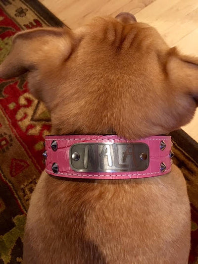 "VN1 - 1 1/2"" Name Plate Cone Studded Collar - 2"