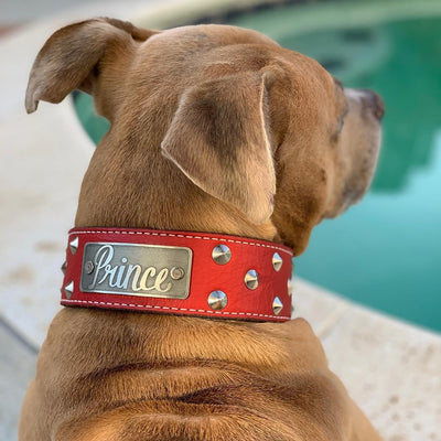 "WN1 - 2"" Name Plate Cone Studded Leather Dog Collar"
