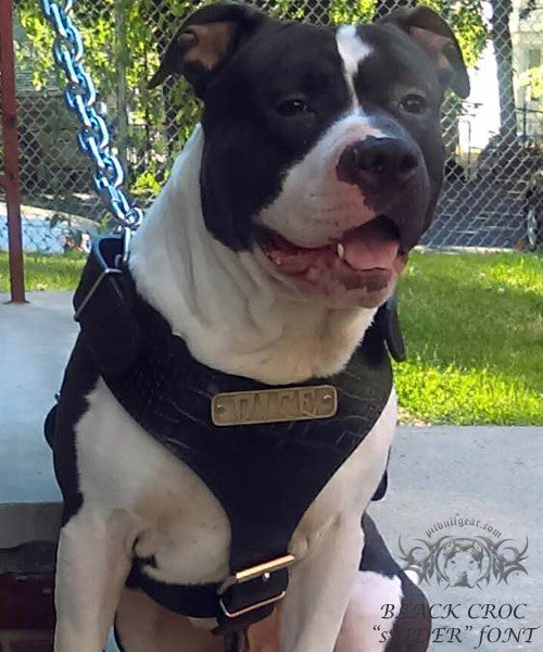 Personalized Leather Dog Harness | Pit Bull Gear