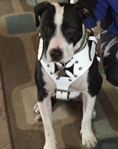 Y04 - Maltese Cross Studded Leather Harness - 3