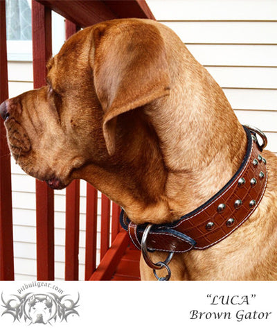 "J38 - 2 1/2"" Studded Leather Dog Collar - Pit Bull Gear"