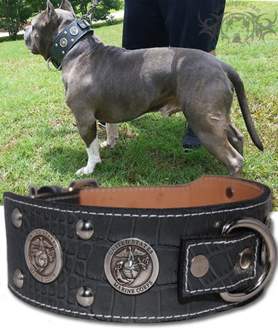 "J6 - 2 1/2"" Military Themed Studded Leather Dog Collar - 1"