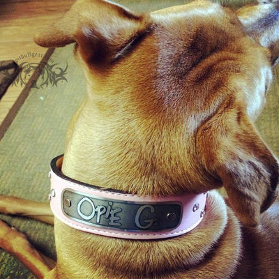 "N11 - Name Plate 1 1/2"" Wide Leather Dog Collar w/Gems - 6"