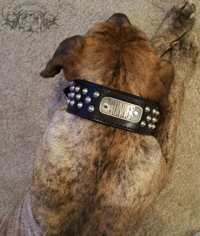 "N5 - 2"" Name Plate Tapered Dog Collar w/Studs - 8"