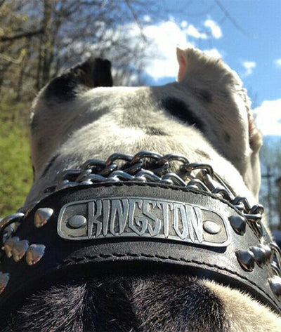 "N5 - 2"" Name Plate Tapered Dog Collar w/Studs - 1"