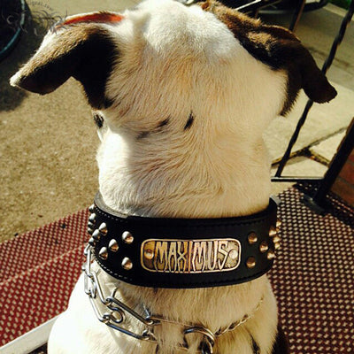 "N5 - 2"" Name Plate Tapered Dog Collar w/Studs - 7"