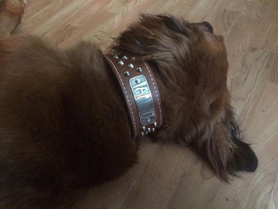 "N5 - 2"" Name Plate Tapered Dog Collar w/Studs - 9"