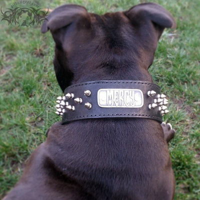 "N6 - 2"" Name Plate Tapered Dog Collar w/Spikes - 7"