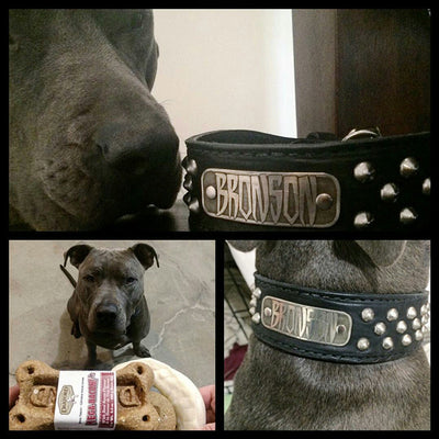 "N5 - 2"" Name Plate Tapered Dog Collar w/Studs - 6"