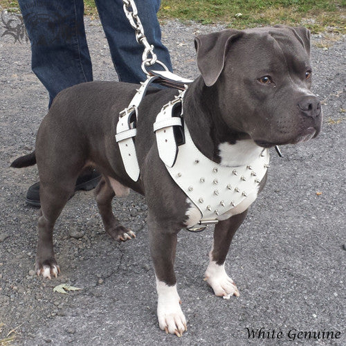 Spiked Leather Dog Harness | Pit Bull Gear