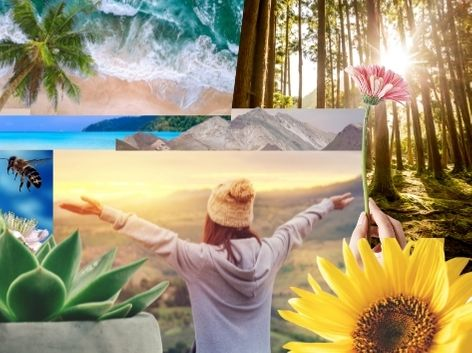 various images of nature collage