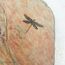 Load image into Gallery viewer, dragonfly close up of the etching in the stone