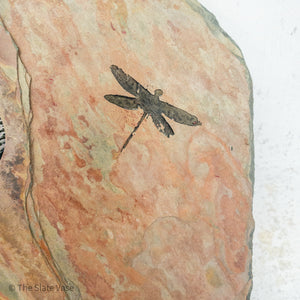 dragonfly close up of the etching in the stone