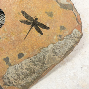 dragonfly etching close up large vase with dragonfly engraving