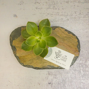 small slate vase colourful stone with business card and succulent