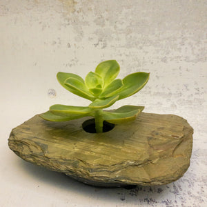 CLASSIC small slate vase with succulent