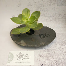 Load image into Gallery viewer, Succulent in Small Slate Vase with Gum Nut etching
