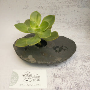 Succulent in Small Slate Vase with Gum Nut etching