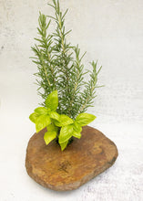Load image into Gallery viewer, MEDIUM + vase with LOVE etching and herb arrangement